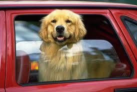 Viaggiare Con Il Cane In Auto
