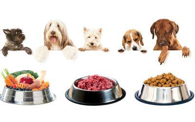 dieta-cane-eta-corretta