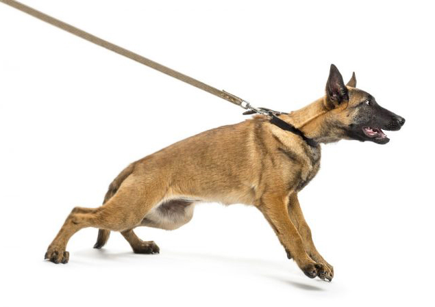 cane-che-tira-alguinzaglio