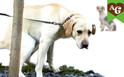 educare-cane-bisogni-fuori-casa