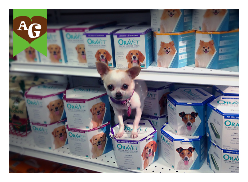 Oravet-piace-alimentazione-cane