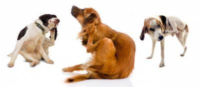cani che si grattano