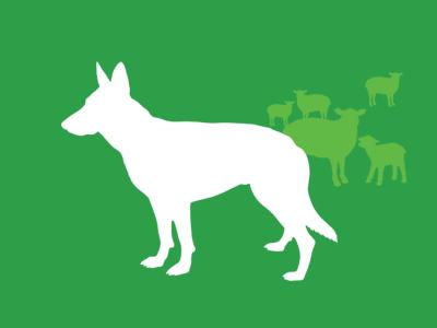 Gruppo FCI, cani da pastore