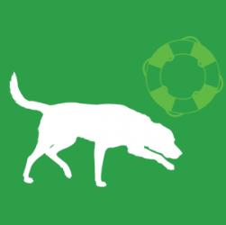 Gruppo FCI, cani da riporto terra e acqua