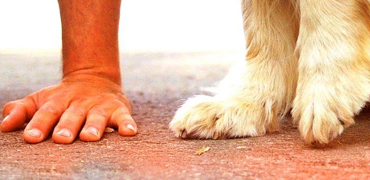asfalto-caldo-cane