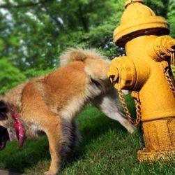 educare cane bisogni fuori casa