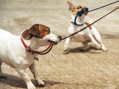 cane tira al guinzaglio