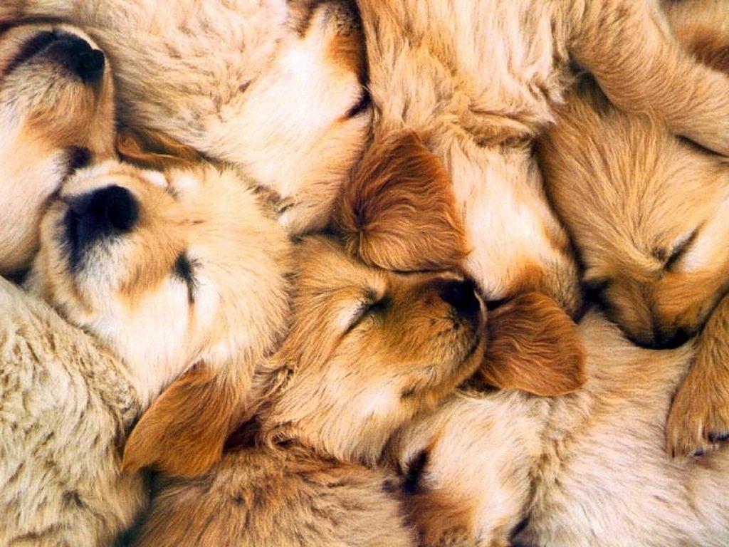cuccioli insieme