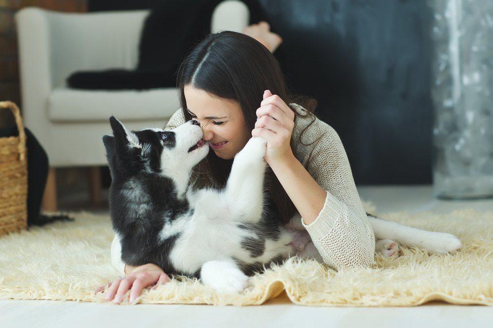 prendere un cane