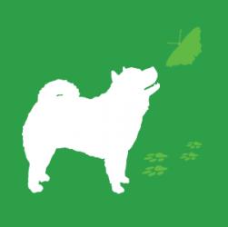 Gruppo FCI, cani tipo Spitz e Primitivo